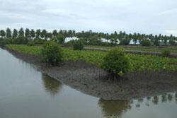 Reforestation Indonésie