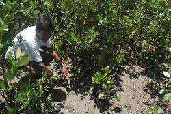 Reforestation Planète Urgence